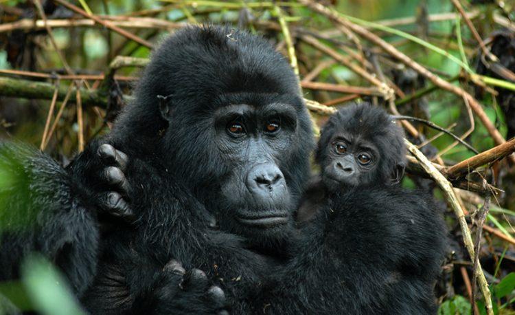 3-days-gorilla-bwindi