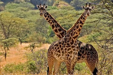 10 Days Best Northern Uganda Adventure Safari