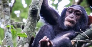 15 Days Highlights of Uganda & Rwanda
