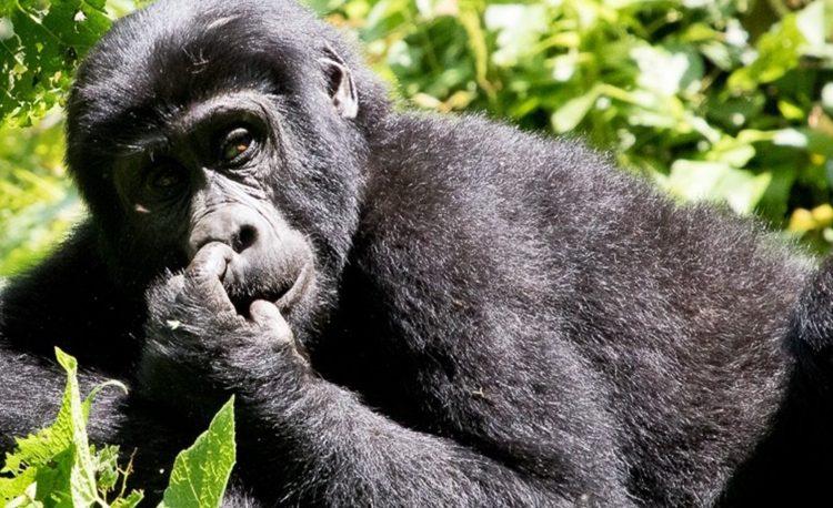3 Days Gorillas in the Mist Rwanda