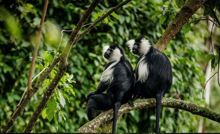 8 Days Primates of Rwanda